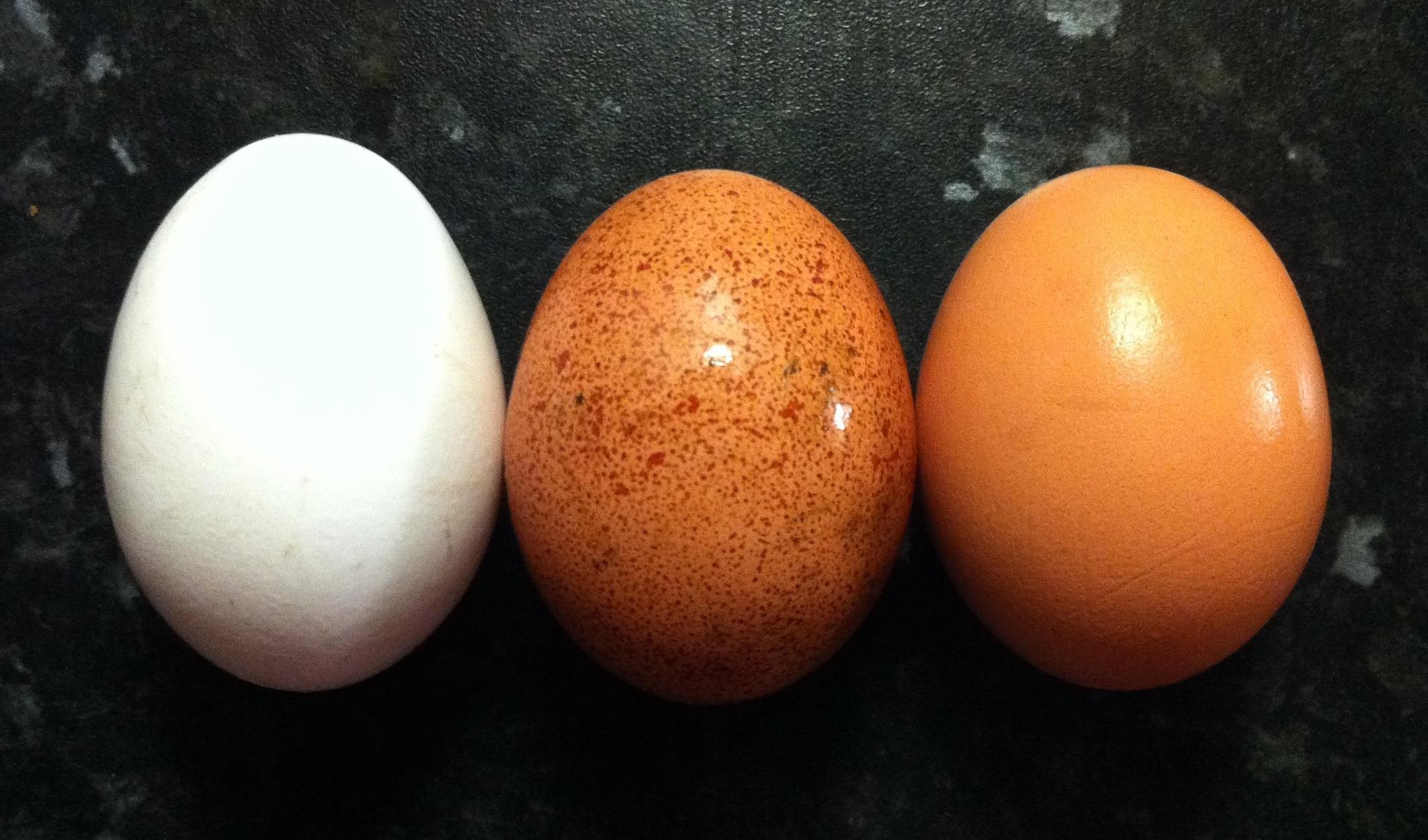 wikipedia - yumurta son kullanma tarihi