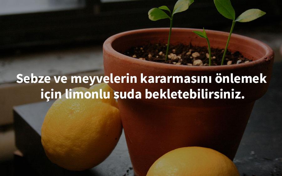 growingwildceeds-  limon pratik bilgi