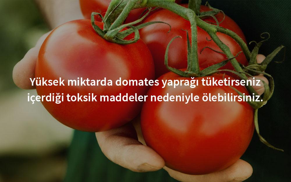 zehirli-domates