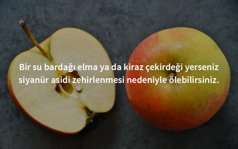 zehirli-elam