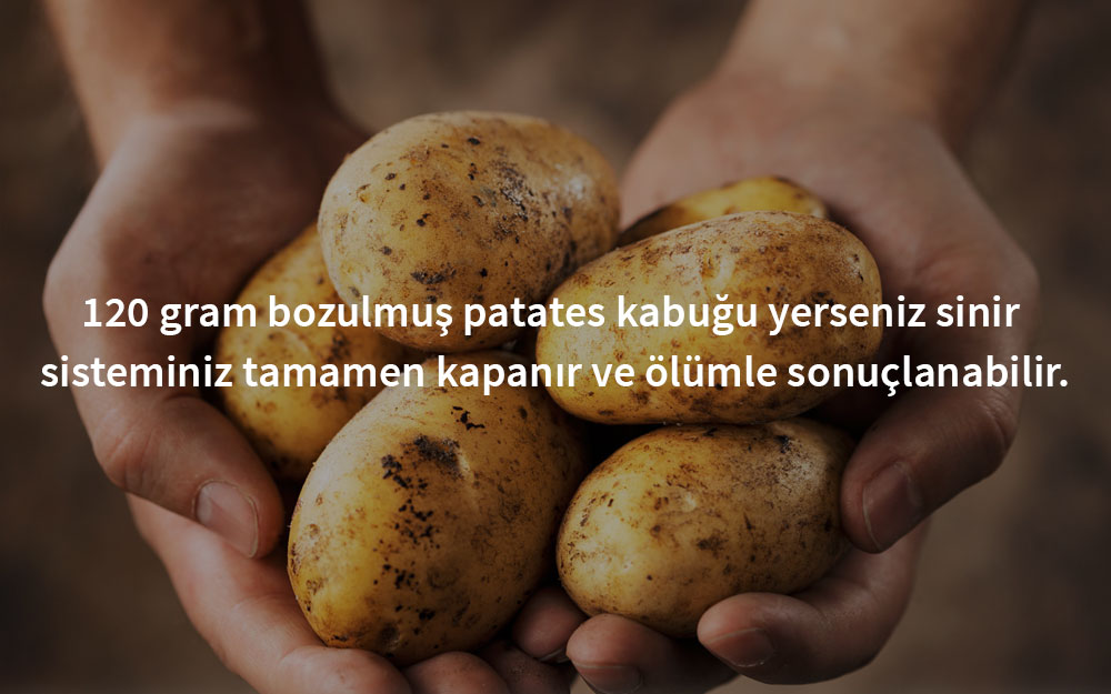 zehirli-patates