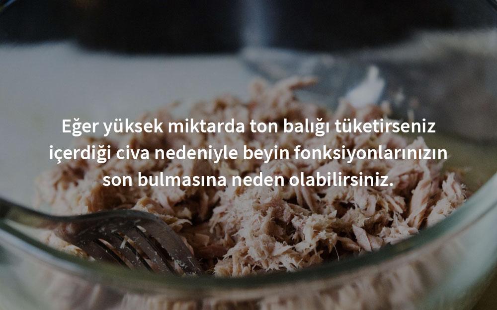zehirli-ton-baligi