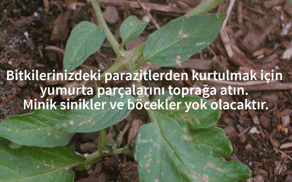 yumurta-kabugu-bitki-hastaliklari