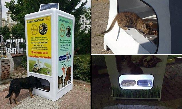 kedi-kopek-sokak-hayvanlari