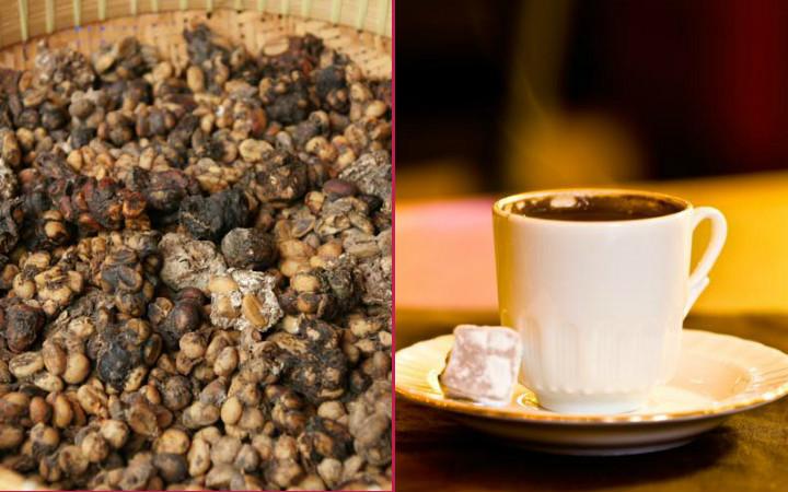 kopi-luwak-turk-kahvesi