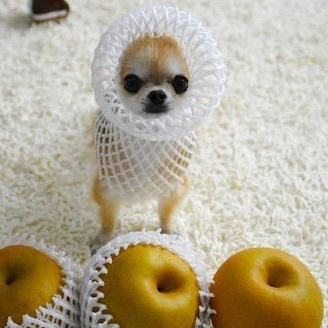 http://www.popsugar.com/food/Food-Halloween-Costume-Ideas-Dogs-38154962?stream_view=1#photo-38155128 | popsugar