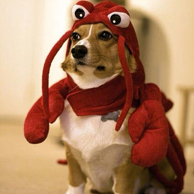 http://www.popsugar.com/food/Food-Halloween-Costume-Ideas-Dogs-38154962?stream_view=1#photo-38155128 | popsugar