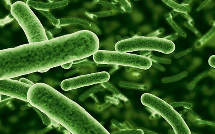 dogaveinovasyon - hastalıklara neden olan bakteriler