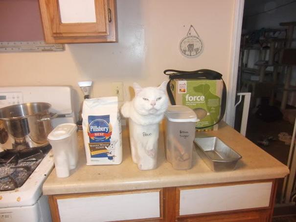 http://www.boredpanda.com/cat-logic-funny/ | boredpanda
