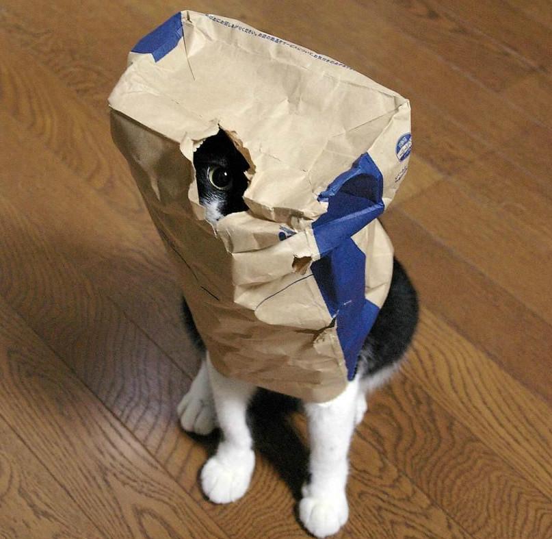kedi-saklanma