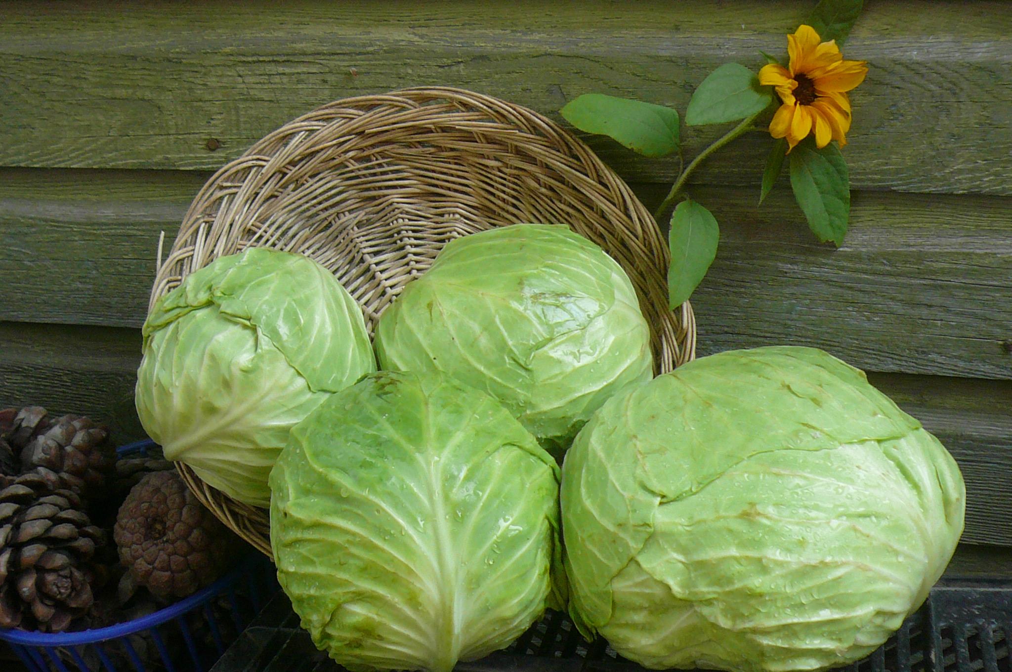 nashsorganicproduce