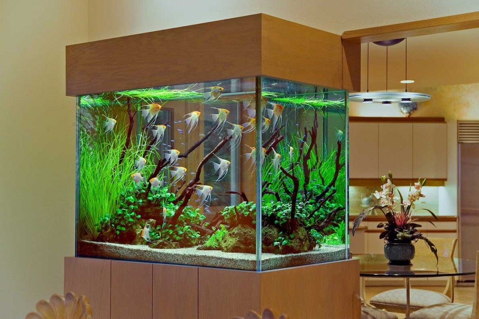 http://lighthom.co/home-interior-with-exciting-aquarium/amazing-aquarium-design-on-kitchen-with-dining-set-on-the-back-look-awesome-interior-kitchen-design/ | lighthom