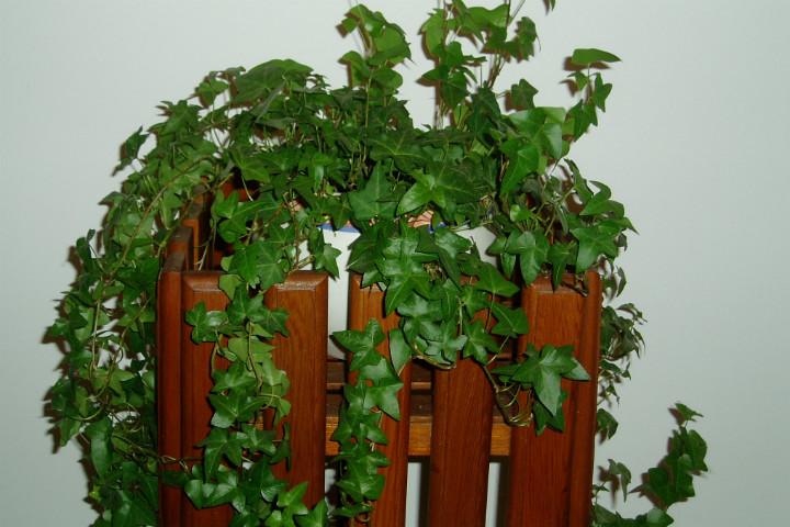 myindoorhouseplants