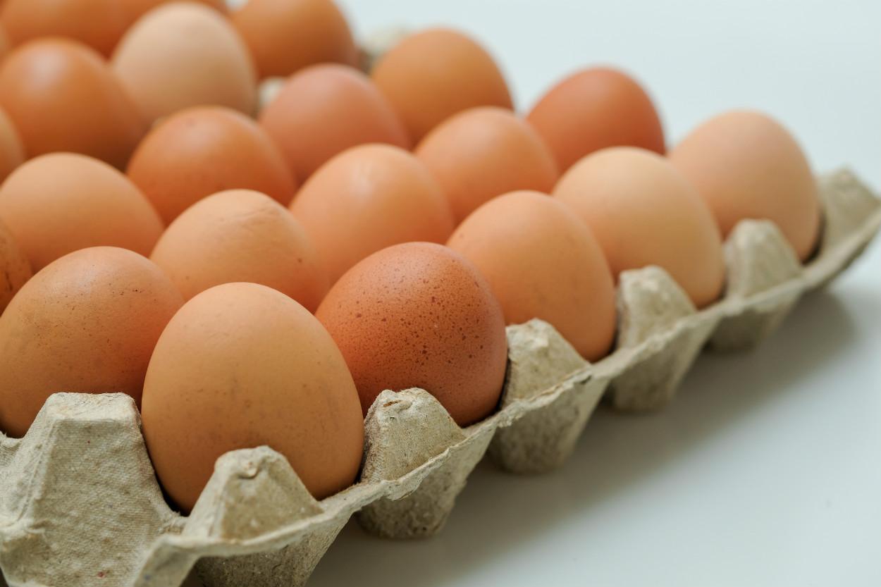 kahverengi-yumurtalar-kasim-2020