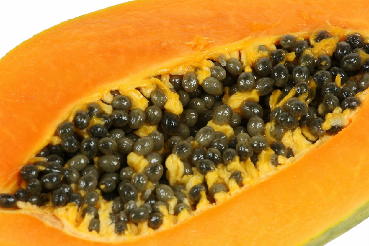 papaya-cekirdegi-ocak-2021