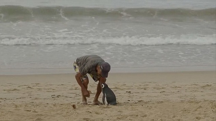 http://www.boredpanda.com/man-saves-penguin-returns-swims-5000-miles | boredpanda