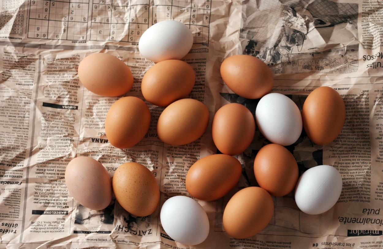 yumurta-tavuk-renkleri-kasim-2020