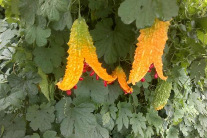 http://www.agaclar.net/forum/fidan-ve-fide-bitki-uretim-tohum-cimlenme-celik-asi/33500.htm | agaclar.net