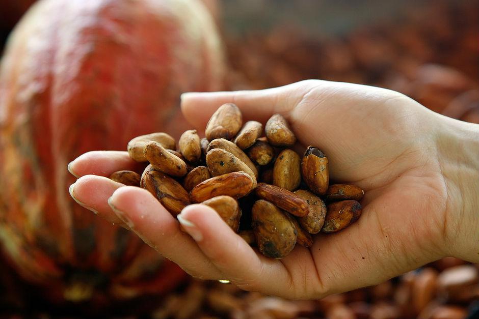 kakao-cekirdeginden-cikolataya