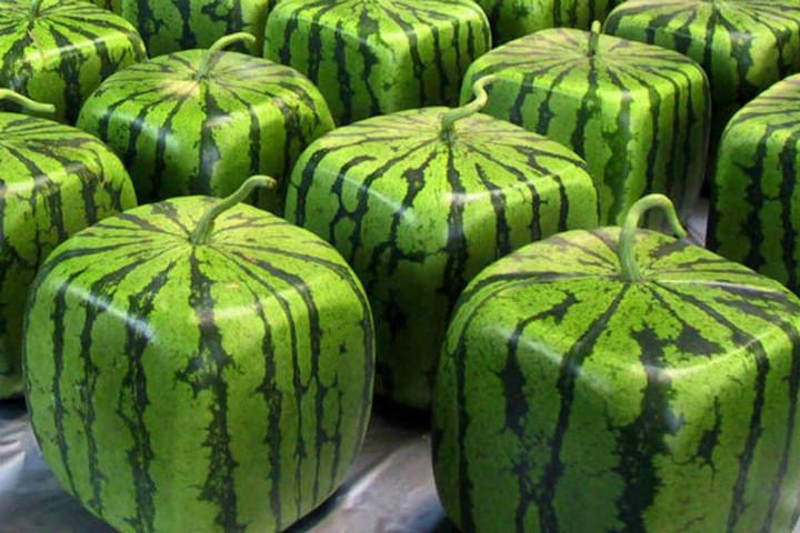 melonmold