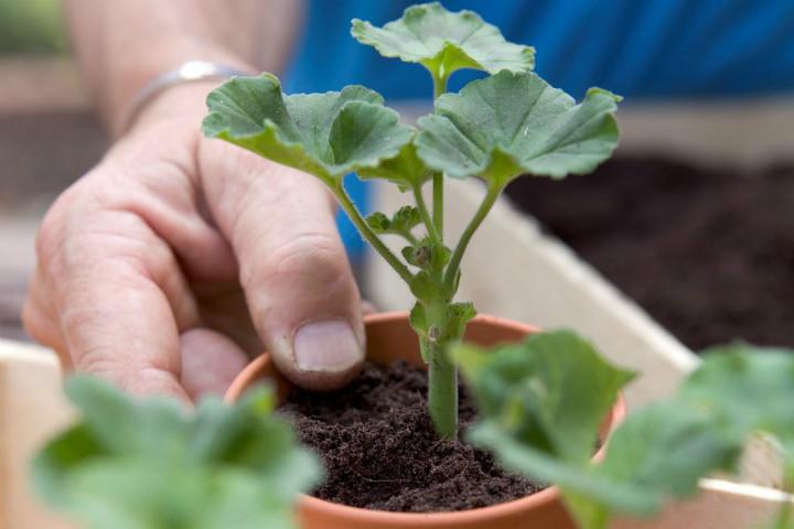 gardenersworld