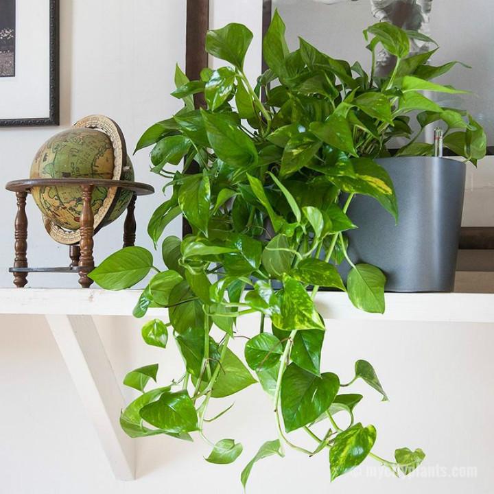 mycityplants
