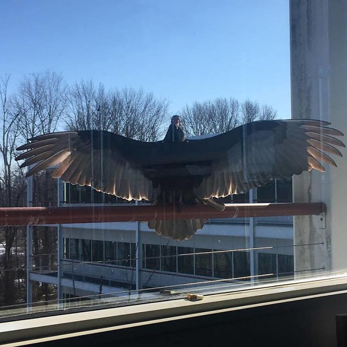 https://www.boredpanda.com/office-feathered-friends-window-birds/ | boredpanda