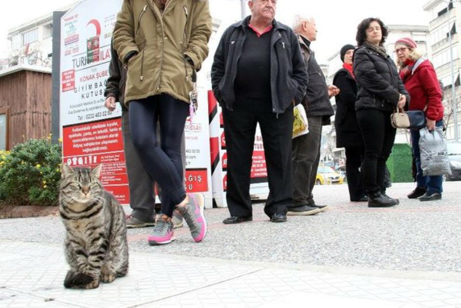 sutcuyu-bekleyen-kedi