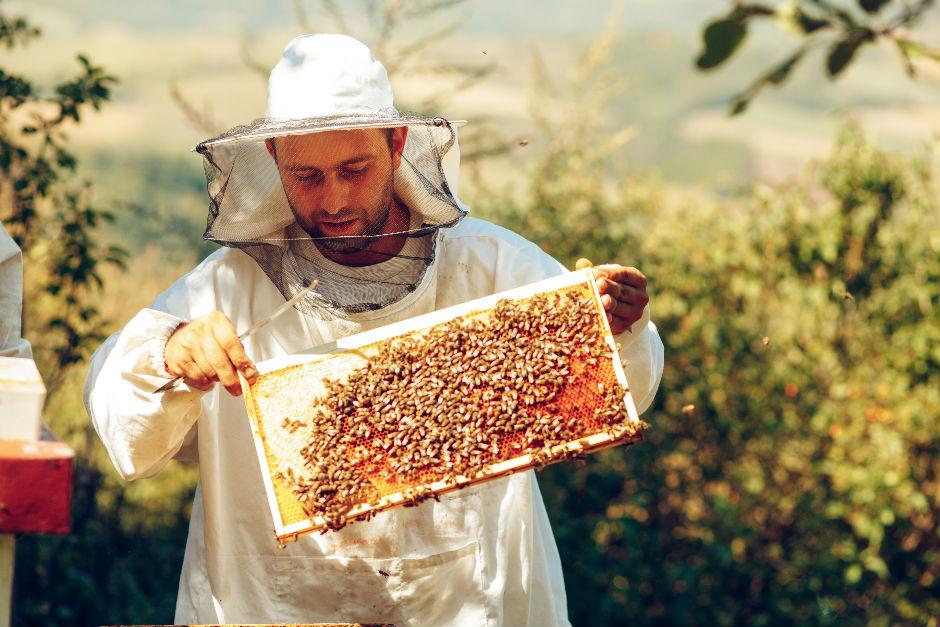 ari-poleni-cikarma