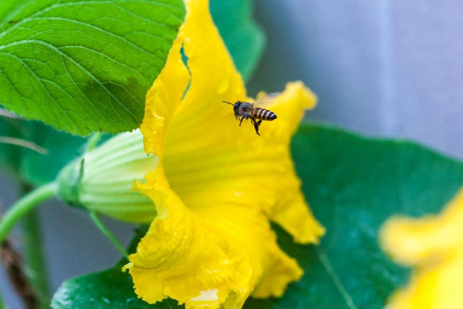 ari-poleni-nasil-elde-edilir