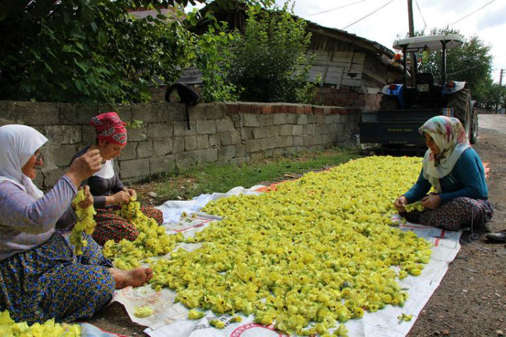 http://www.milliyet.com.tr/cicek-bamyasina-ceyrek-altin--ekonomi-2722915/ | milliyet