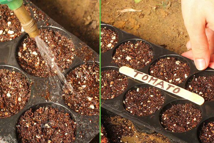 https://www.fabhow.com/grow-tomatoes-pot.html | fabhow