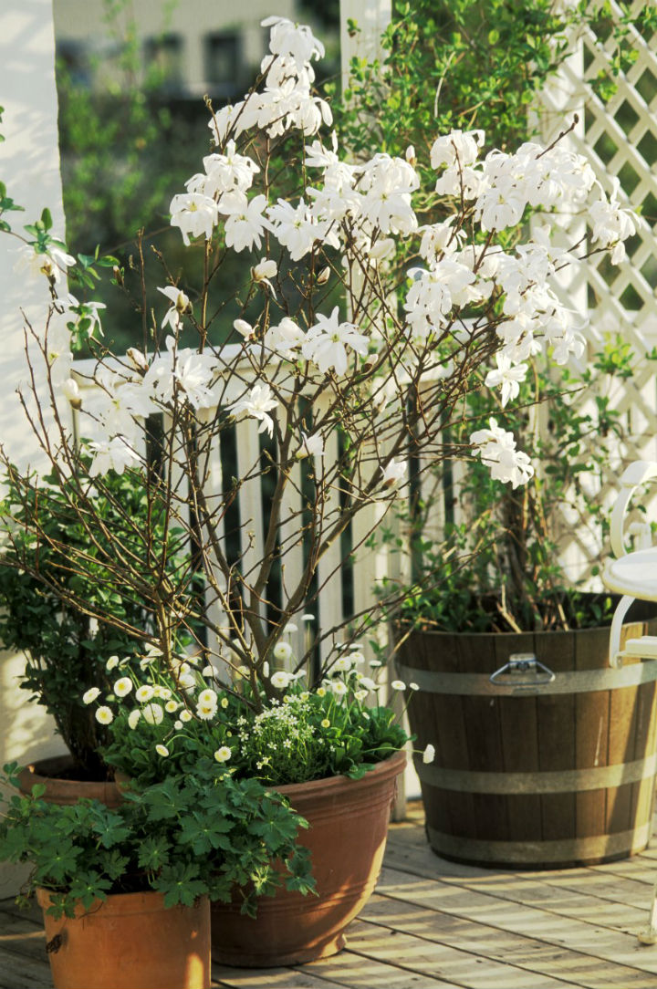 gardenclinic