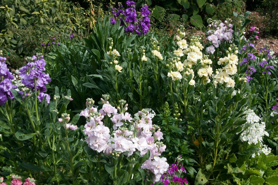 gardeningknowhow