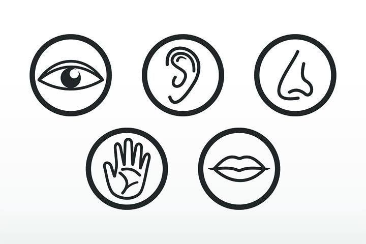 duyu-organlari