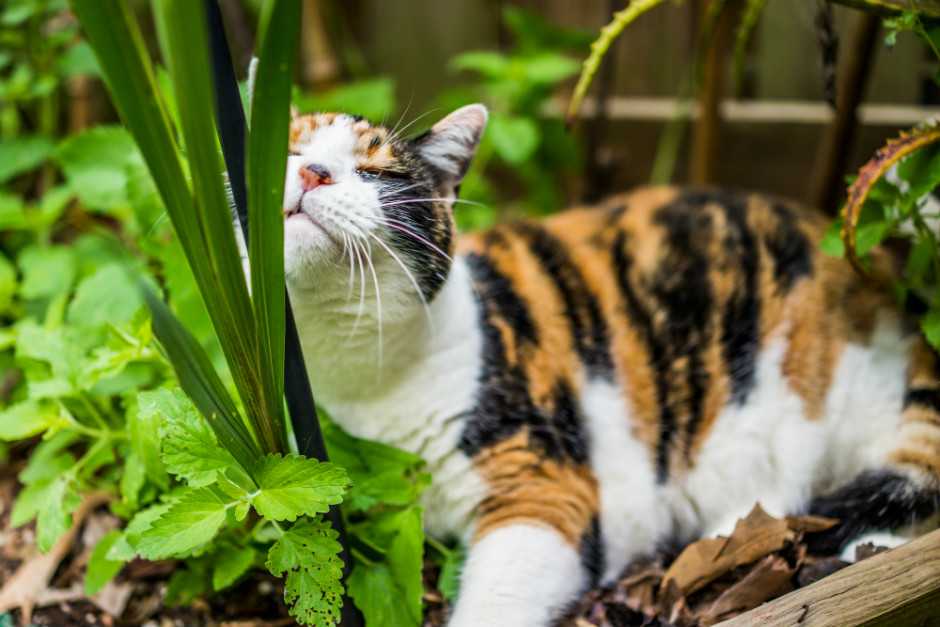 kedi-nanesi-nasil-yetistirilir-2