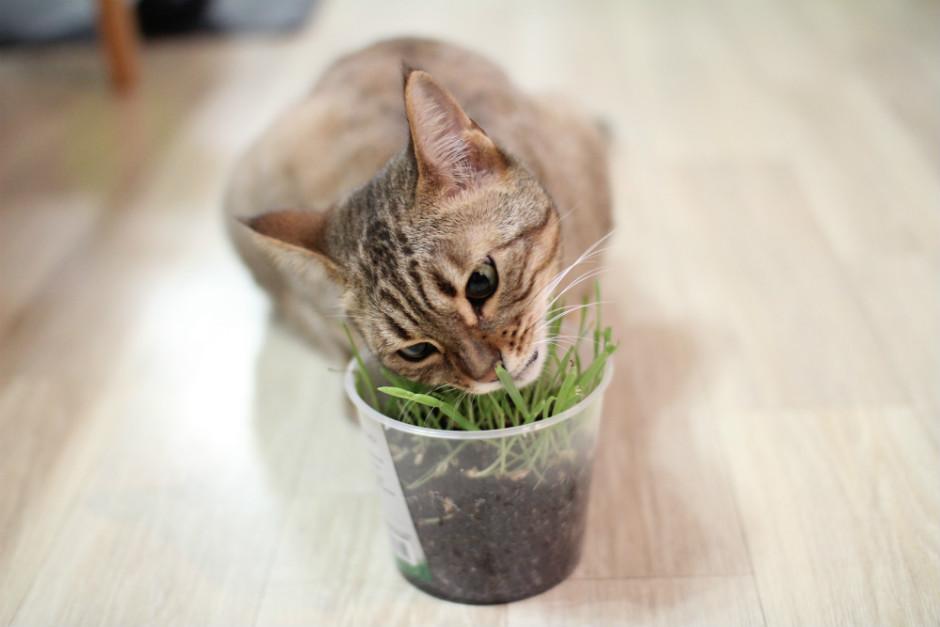 kedi-nanesi-nasil-yetistirilir-3